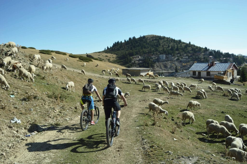 makedonien-mtb-debredeplanker-dbp-bjerge-popovasapka-e-mountainbike-natur-kultur-får